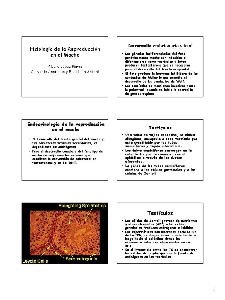 20 - Fisiologia de la Reproduccion en el Macho.pdf