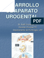Desarrollo de Aparato Urogenital 1