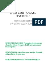 Genes Del Desarrollo