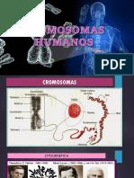 cromosomas humanos