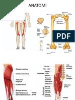 Anatomi tungkai atas