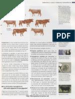 Biotecnologia Para Principiantes Reinhard Renneberg 211 240#