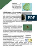 PhyLum Flagellata