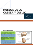 Huesos Expo Final PDF