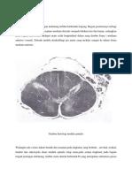 Histologi medulla spinalis.docx