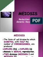 Meiosis Reductiodivision