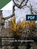 Guia Morfologia Sistemática de Plantas Vasculares