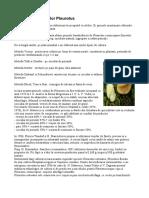 Cultivarea ciupercilor Pleurotus