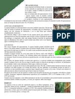 Reproduccion y Habitat de Las Iguanas