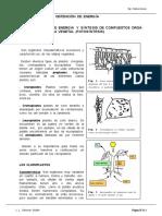 11Fotosintesis