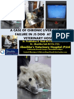 A Case of Chronic Liver and Kidney Failure in JS Dog at Jibachha Veterinary Hospital