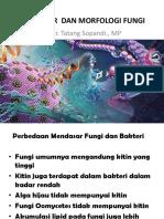 Struktur Dan Morfologi Fungi-1