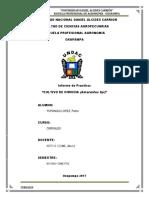 Informe de Practica Cultivo de KIWICHA