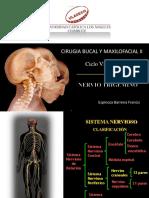 Nervio Trigemino Espinoza