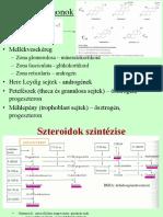 erekció a szteroid ciklus alatt