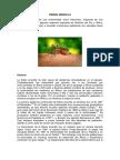 FIEBRE AMARILLA Y DENGUE.docx
