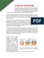 FORMACIÓN DEL DIAFRAGMA.docx