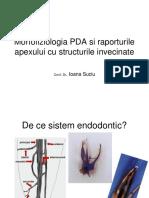 1. Morfofiziologia PDA si a raporturilor apexului cu structurile.ppt