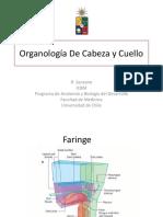 Clase Organos Del Cuello Vascularizaci n e Inervaci n C y C (1)