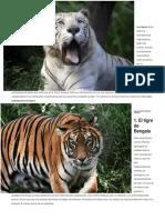 tipos de tigres.docx