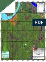 Bosque Deforestacion Palma