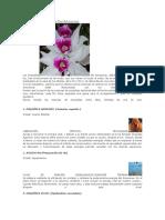 ORQUIDEAS DEL AMAZONAS.docx