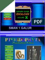 pteridophyta.ppt