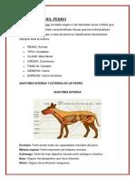 TAXONOMÍA DEL PERRO efrain.docx