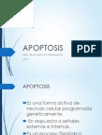 Apoptosis Celular%255b1%255d3
