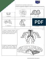 Guia de Estudio Sistema Nervioso