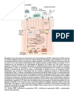 EC Patogenicas
