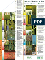 Nutrient Disorders in Rice Poster