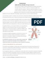 CROMOSOMA.docx