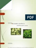 plantas medicinales.pptx