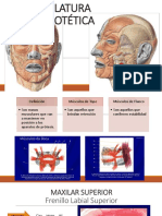 Musculos Paraproteticos