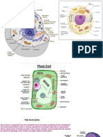 2-Fundamentals of cell 2017.pdf