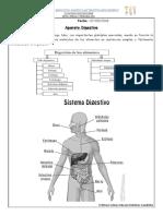 sistemas Digestivo
