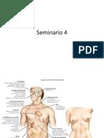 Seminario 4 Fisio