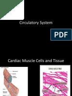 Circulatory System VCE biology