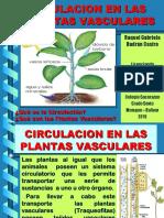CIRCULACION EN PLANTAS VASCULARES - Raquelita.ppt