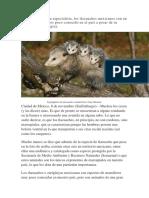 Marsupiales.docx
