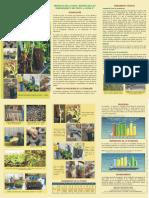 13 PROPAGACION CLONAL EN PORTAINJERTO DE PALTO DUKE 07.pdf