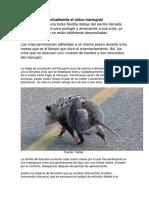 El tlacuache es actualmente el único marsupial mexicano