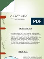 Ecosistema Selva Alta o Rupa Rupa