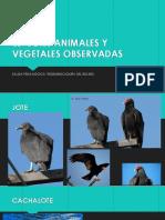 Especies Animales y Vegetales Observadas