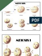 celulas mitosis_miosis.docx