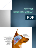 Doenças Do Sistema Neuromuscular
