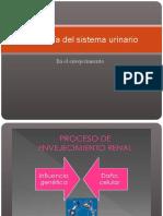Fisiología Del Sistema Urinario6103