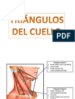 triangulos del cuello.pptx