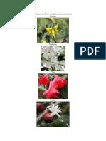 Plantas Con Flores Completas e Incompletas